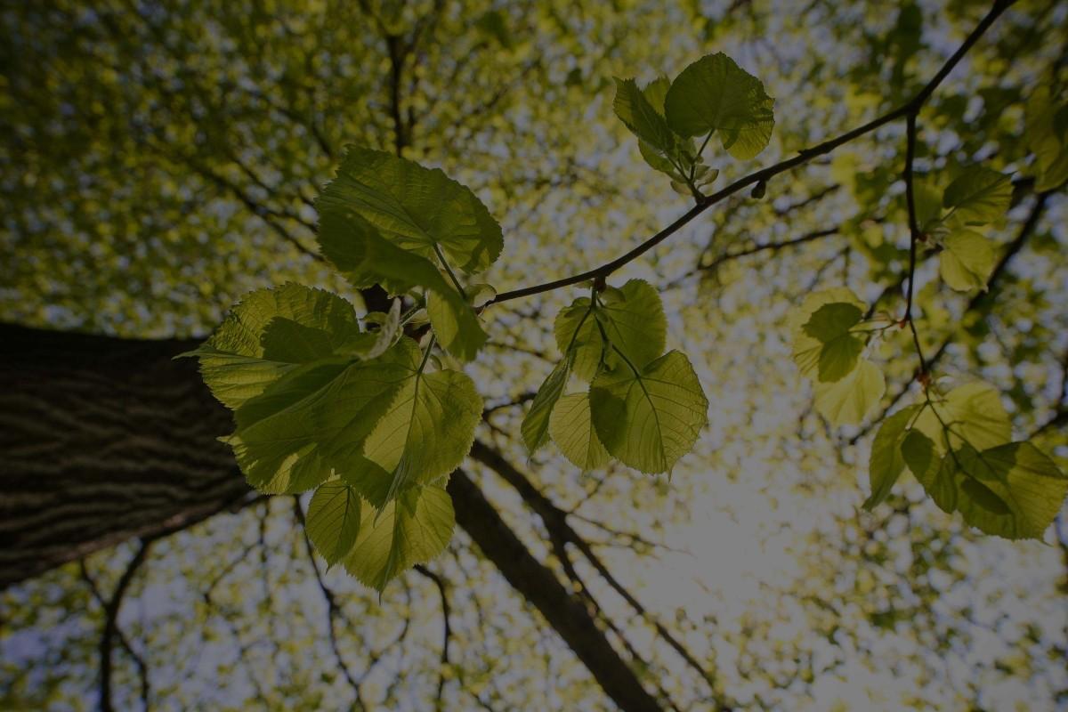 picjumbo.com_IMG_8568-b